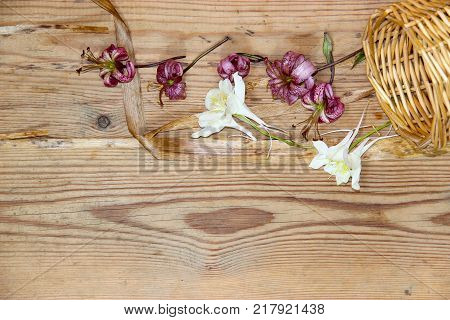 Dried wilted lilies on a dark wooden surface poster