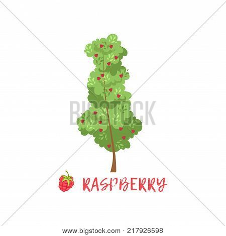 Raspberry garden berry bush with name vector Illustration on a white background