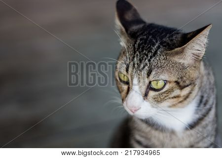 The eyes cat portrait with bokeh background