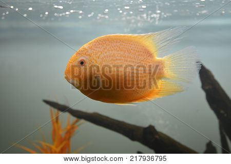 Ornamental fish which are contained in aquariums. The first mention of artificial fish breeding in China dated back to 1500 years BC. e.