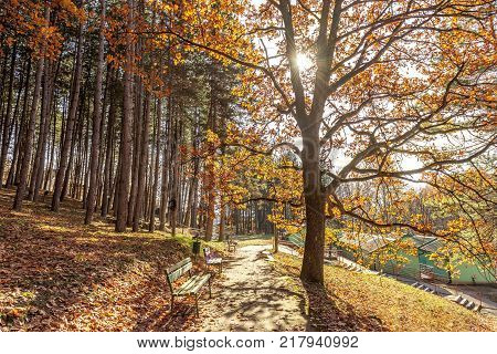 autumn city park scene with orange yule log tree and fallen leaves with park benches. autumn nature landscape