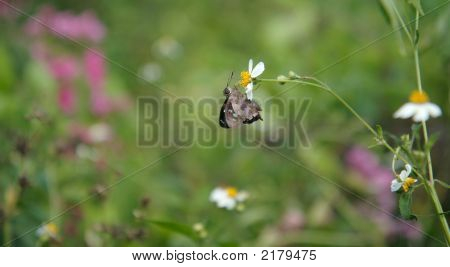 Bug On Flower