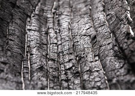 Black and white wood texture closeup background. Hardwood surface, old tree bark backdrop