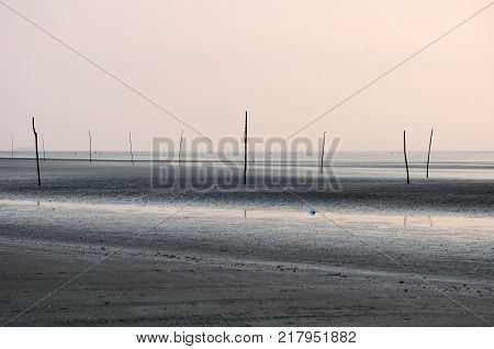 Sticks buried in an empty barren beach at low tide in South Vietnam Can Gio area.