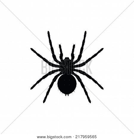 Black spider top view silhouette closе-up spider scary big spider isolated on white poisonous isect arachnophobia background spider vector icon.
