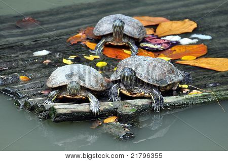 Turtles on the port