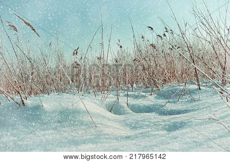 Winter landscape. Snowy winter field and frozen winter plants at the sunset, sunset winter scene. Sunny winter landscape. Snowy winter nature, winter nature background