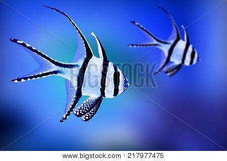 Fish exotic animal aquarium water tropical color