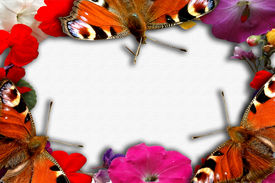 Butterfly And Flower Frame
