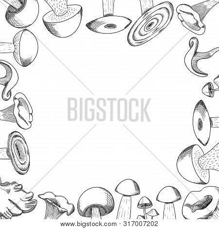 Mushroom Hand Drawn Sketch Vector Frame. Mushroom Shiitake, Fresh Organic Food Isolated On White.