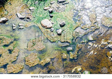 Lichen Or Algae Life Plant In The Hot Spring Mineral Sulfer Water With Green Chlorophyll For Photosy
