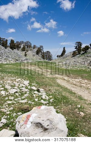 Picturesque Mountain Landscape. Stone Valley. Relict Forest Of Lebanon Cedar. Saddle Between Mountai