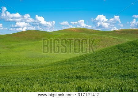 Sunny Summer Day In The Rolling Green Grass Hills Of The Palouse In Washington State
