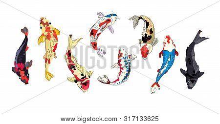 Koi Fish Set. Japanese Carp, Chinese Goldfish, Asian Pond. Fish Concept. Vector Illustrations For To