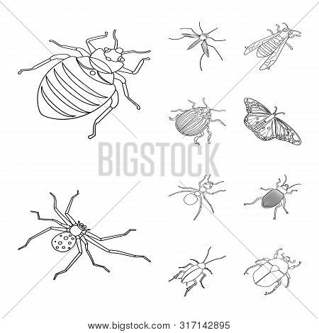 Vector Illustration Of Fauna And Entomology Icon. Set Of Fauna And Animal Stock Symbol For Web.