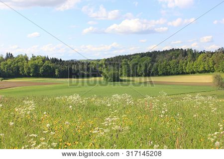 Countryside And Fields Of Volketswil On A Sunny Summer Day