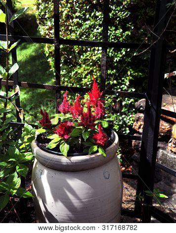 Antique Crock Is Used As A Planter In Shady Garden Spot.  Red Flowers Are Blooming In It.