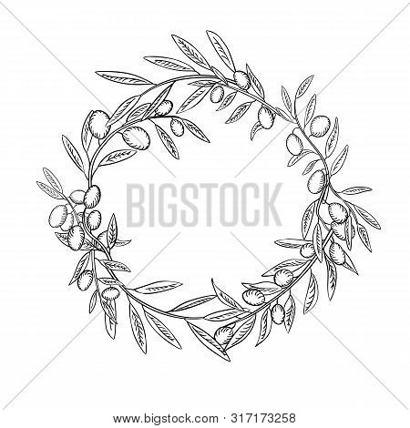 Olive Branches With Fruits Outline Wreath. Olea Europaea Twigs Linear Botanical Sketches.