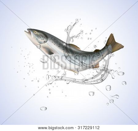 Salmon Fish Isolated On White Without Water Splashes On White.