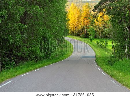Winding Asphalt Road In The Forest With Green And Yellow Trees