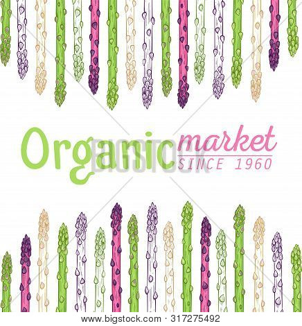 Organic Asparagus Market Hand Drawn Vector Illustration. White, Green And Purple Asparagus Sprouts O