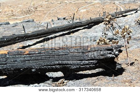 Burnt Tree Trunk Log Section In Forest