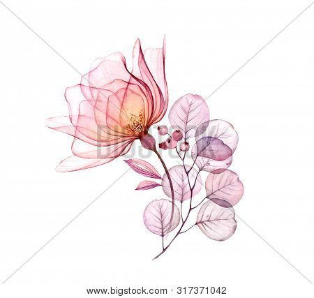 Transparent Floral Arrangement Of Big Pink Rose Flower, Berries, Leaves, Branches Isolated On White
