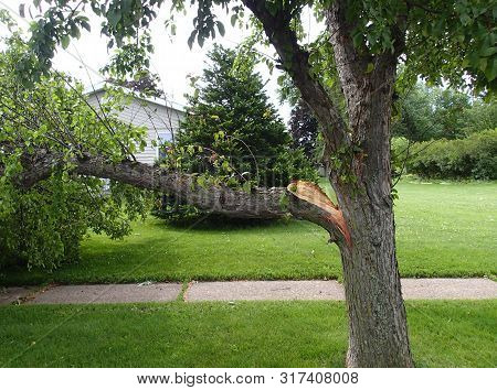 Broken Tree Limb From Storm Damage Laying On A Lawn