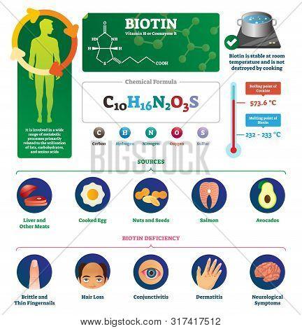 Biotin Vector Illustration. Labeled Metabolism Vitamin Infographics Scheme. Chemical Formula Diagram