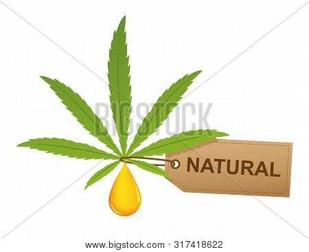 Cannabis Leaf With Oil Drop And Natural Label Isoladet On White Background Vector Illustration Eps10