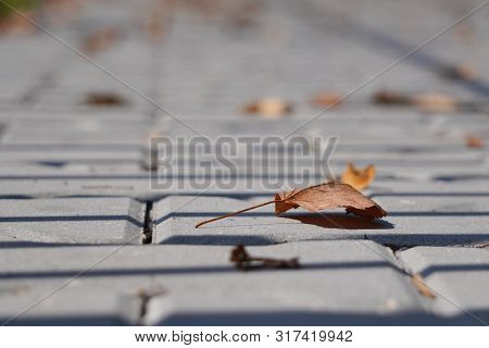 Yellow Dry Autumn Leaves Have Fallen And Lie On The Sidewalk. City Street With Sidewalk. Autumn Seas