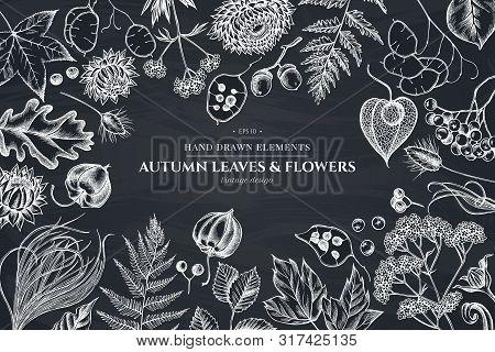 Floral Design With Chalk Rowan, Rowan, Acorn, Buckeye, Fern, Maple, Birch, Maple Leaves, Lagurus Fea