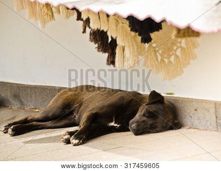 Ein Hund liegt im Schatten einer Überdachung im Sommer auf dem Boden und schläft in aller Ruhe, Made
