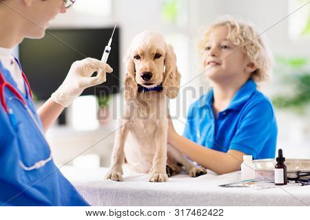 Vet With Dog. Puppy At Veterinarian Doctor.