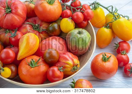 Ripe colored tomatoes in a wooden bowl. Colorful heirloom tomatoes. Fresh seasonal vegetables, natural healthy foods. Ripe red tomatoes