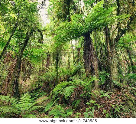 The New Zealand native bush. Fern tree poster
