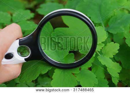 Round Magnifier Over A Green Leaf Of A Plant In Nature