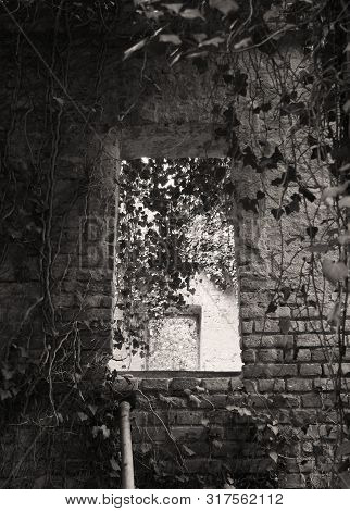 Window Of Desolated Chapel On The Old Cemetery For Insane People With Growth Of Ivy In Prague, Czech