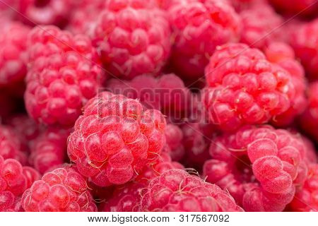 Macro Photo Food Raspberry Berry. Texture Background Ripe Pink Raspberry Berry. Image Food Product B