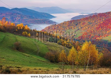 Autumn Countryside At Foggy Dawn. Beautiful Mountain Landscape In Autumn. Trees In Fall Foliage, Dis