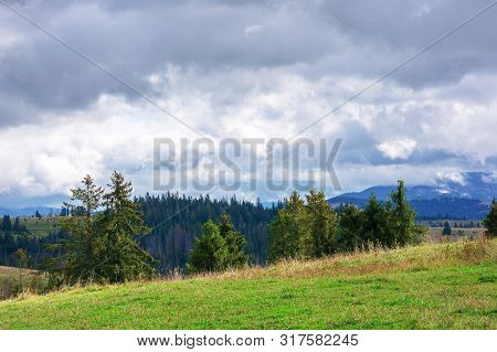 Spruce Forests On Rolling Hills. September Weather With Cloudy Sky. Mountain Ridge In The Distance.