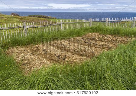 Traditional Raised Bed Garden By The Sea At Elliston, Newfoundland