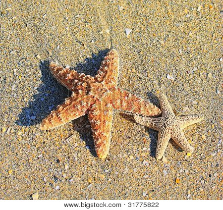 Starfish and sea wave on sandy tropical beach