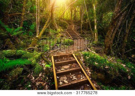 Beautiful Rainforest Jungle In Tasmania, Australia