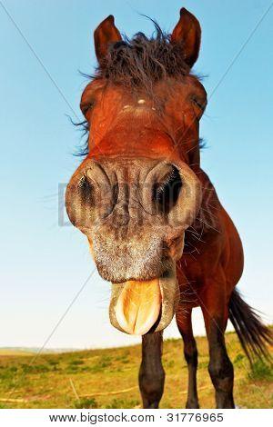 Pferd mit einem Sinn für Humor.