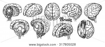 Collection In Different Views Brain Set Vector. Many Kinds And Modification Of Cyber And Human Brain