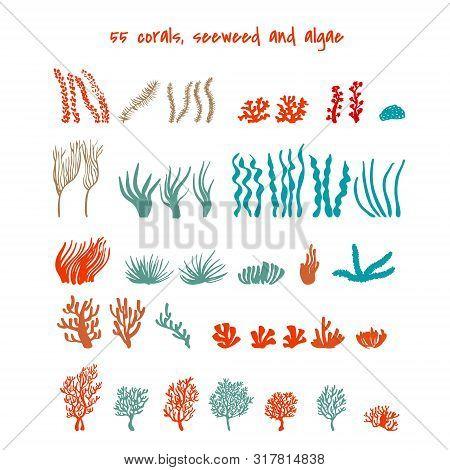 Seaweed And Algae. Various Seagrass And Corals. Underwater And Aquarium Plant Silhouettes. Design El