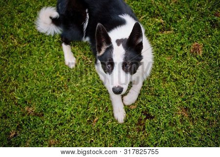 black and white pooch from a dog shelter is lying on its back on the grass, playing with the owner. raising a puppy. take the puppy from the animal shelter. make a friend poster