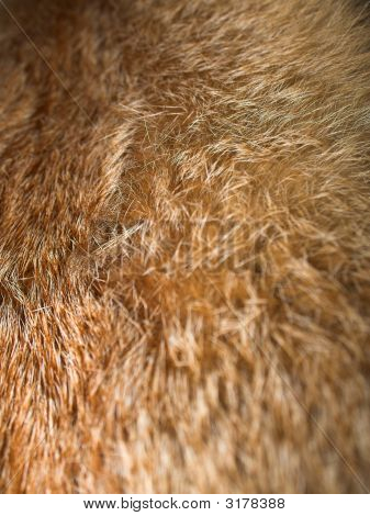 Fluffy fox fur with pied beautiful hairs. poster