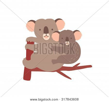 Koala With Baby On Tree Branch Isolated On White Background. Family Of Wild Australian Arboreal Mars